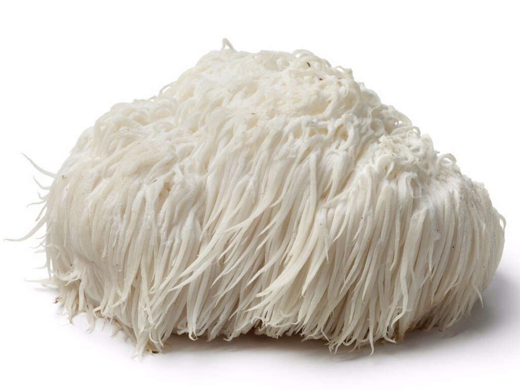 Lions Mane Mushrooms